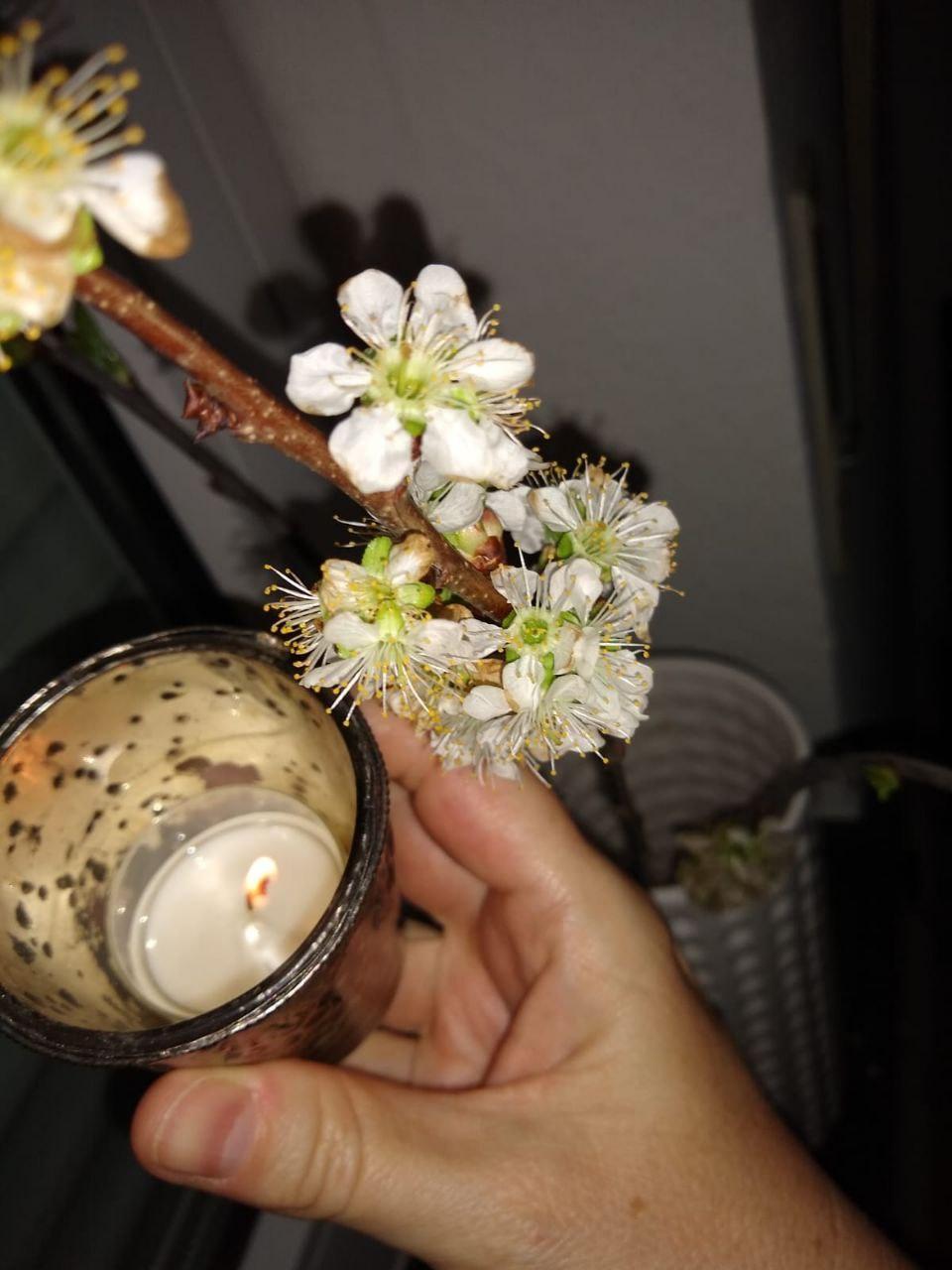 photo_2020-04-11_22-32-05